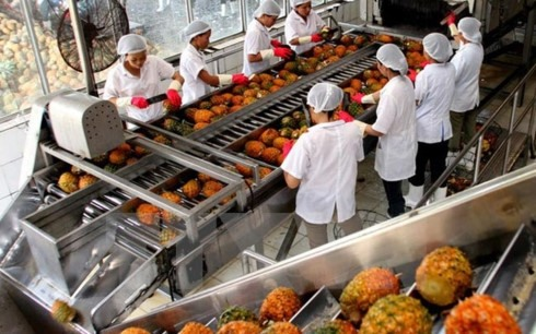Record export of VN fruits in 2017