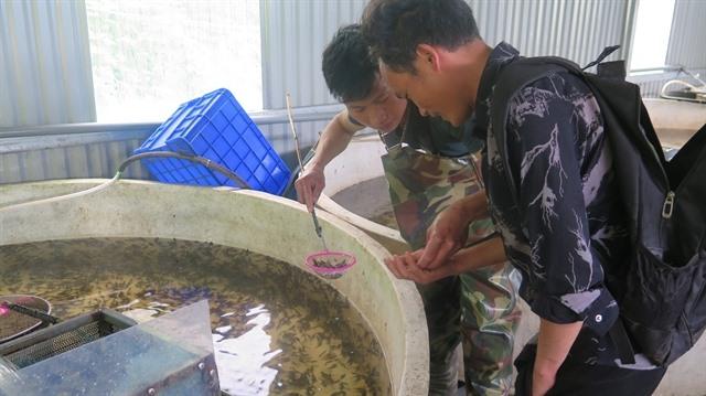 Lào Cai enhances cold-water fish production