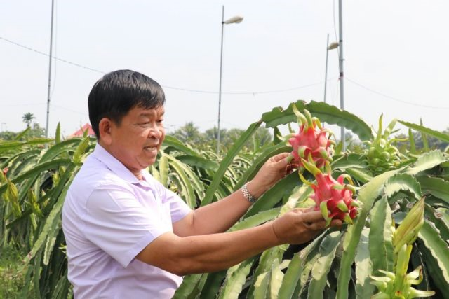 Long An Province seeks to expand use of advanced techniques to grow dragon fruit
