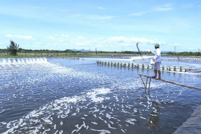 Việt Nam shrimp exports to surge as demand increases