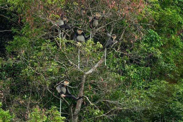 Safe haven for endangered species