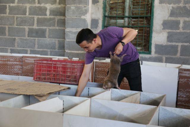 Bamboo rats helpfarmer escapepoverty