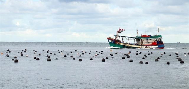 Kiên Giang expands breeding of bivalve mollusks
