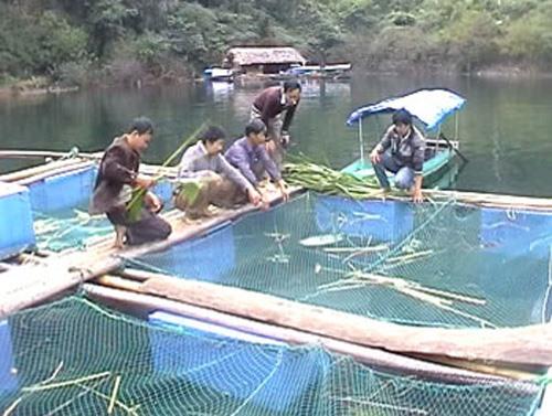 North VN eyes aquaculture growth