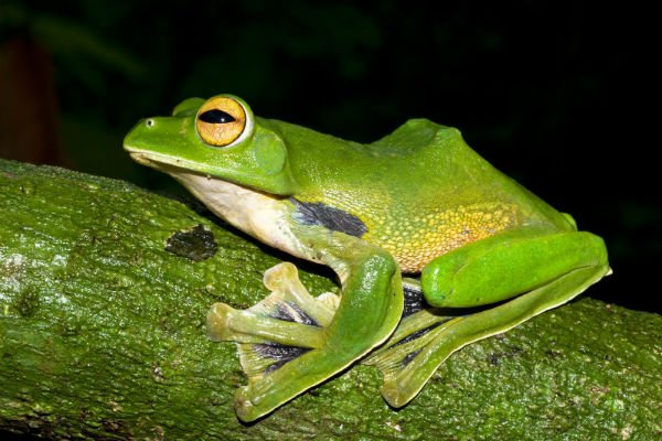 WWF report names 99 news species in VN