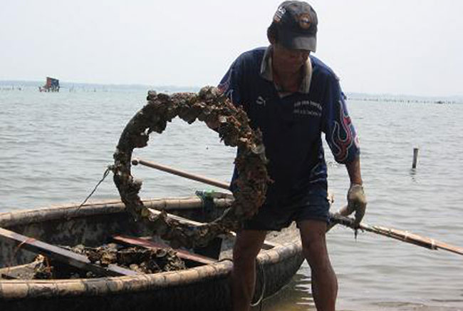Oyster breeders remove tires from Lang Co Bay