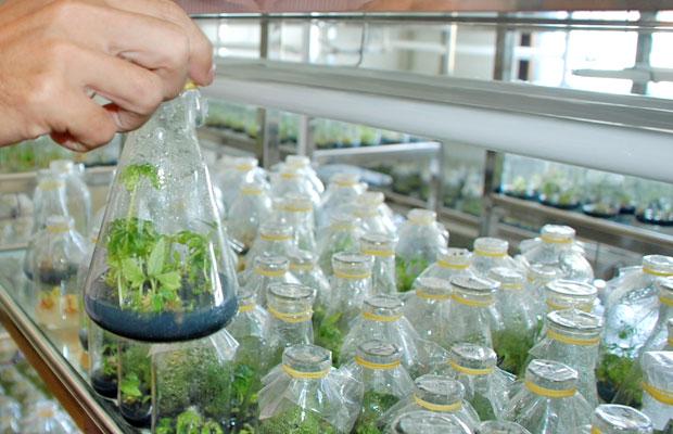 Sustainable farming in focus