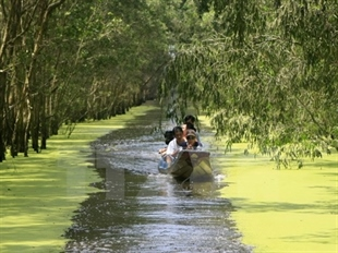 Đồng Tháp to restore its forests