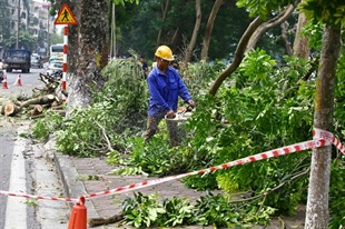 Hà Nội to inform residents of tree-cutting plans
