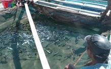 Mass fish death worries Bình Thuận