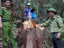 Wood theft investigated in Quảng Nam