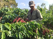 VN coffee industry has huge potential: seminar