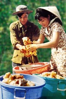 Gathering honey in Cà Mau forest