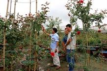 Blooming flower village starts raking in the cash