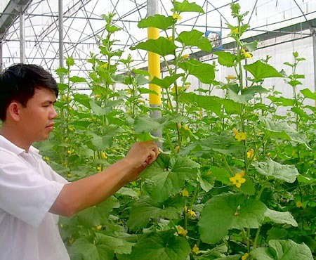 Phú Yên to have High-tech Application Agricultural Zone