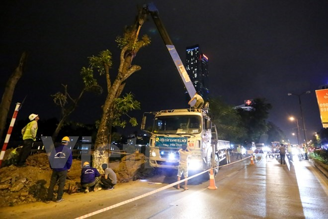 Trees on HNs Kim Mã Street bid farewell
