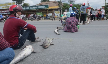 Farmers hit by mass fish deaths to receive aid