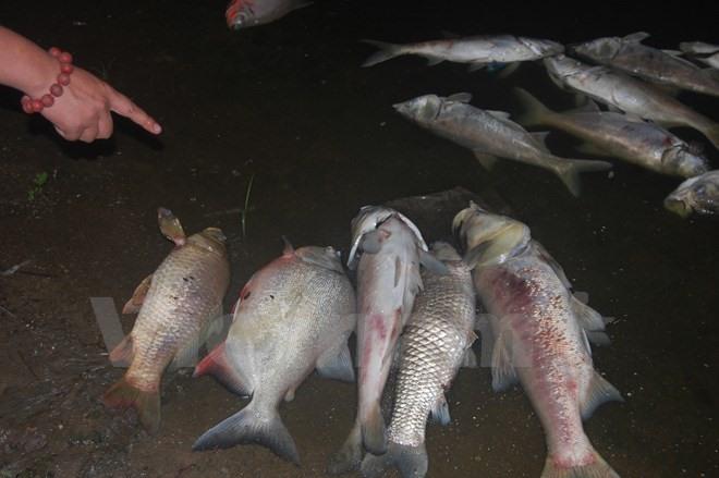 Mass fish deaths in Linh Đàm Lake