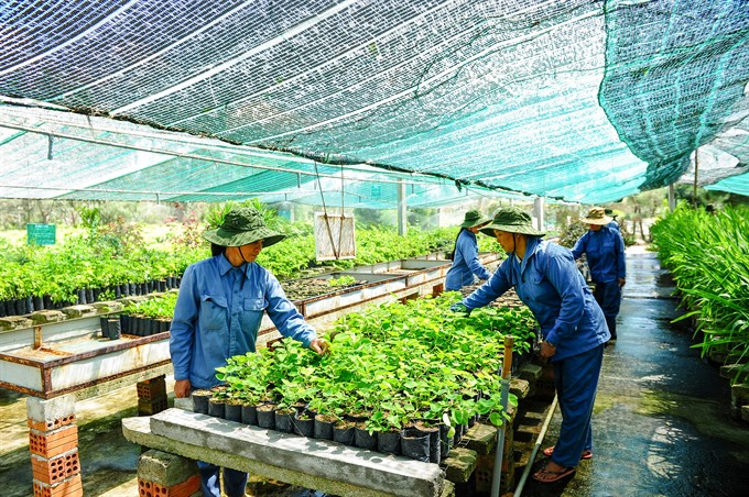 VN needs safe herbal products