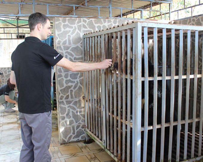 Illegal bear trade still persists in Việt Nam