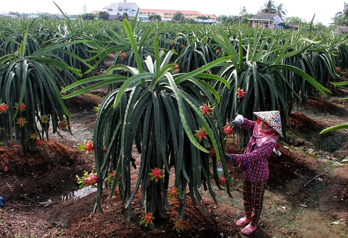 VN fruit sent to tough markets