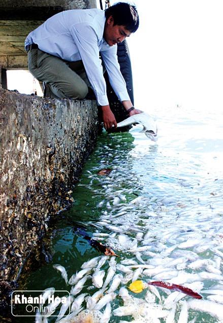 Mass fish deaths off Khánh Hòa province coast