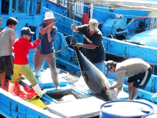 Tuna exports to EU soar in October