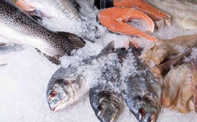 Quảng Bình dumps 606 tonnes of contaminated fish