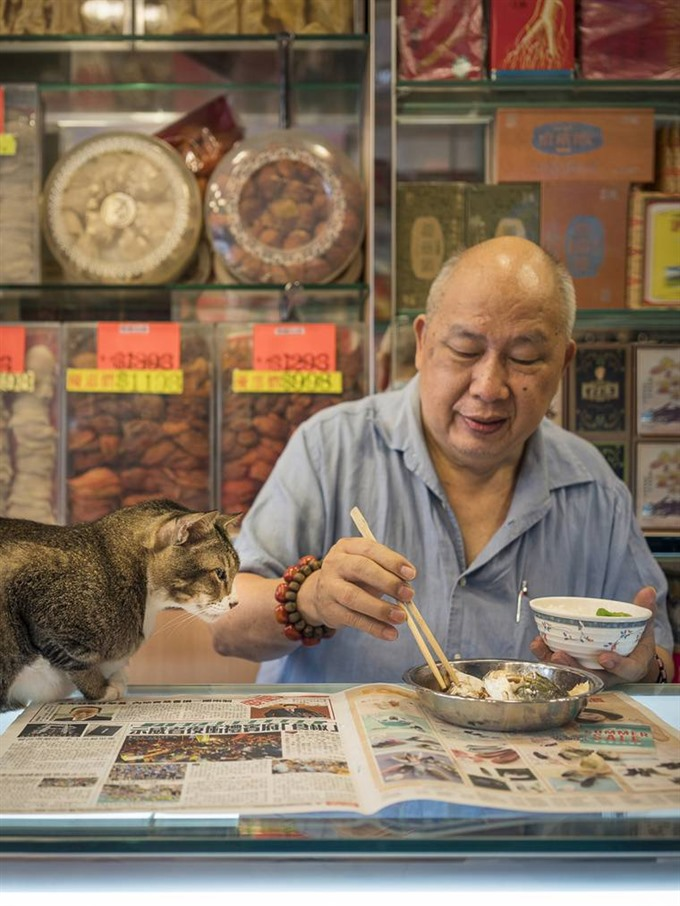Hong Kongs feline friends offer insight into citys past