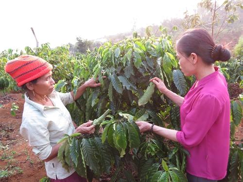 Selfhelp farmers group raise ethnic incomes