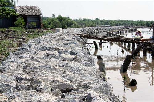 Cà Mau to invest in eastern sea dyke