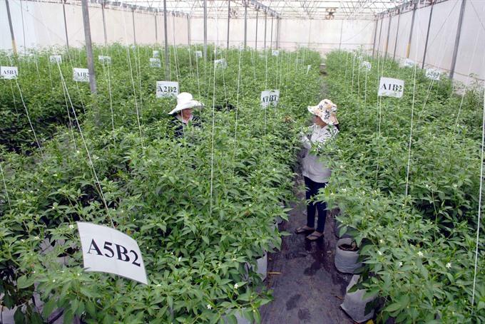 Hi-tech methods raise production value of farm produce: HCM City