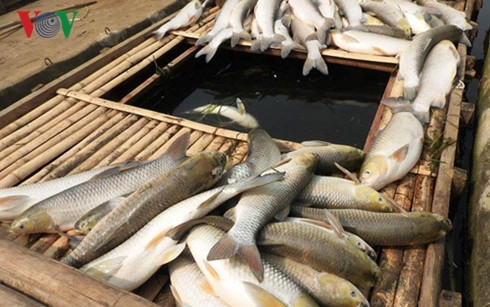 Pollution killed Thanh Hóa fish