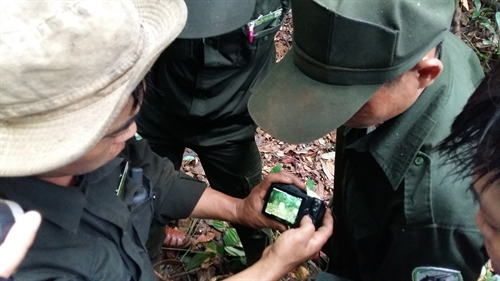 Đà Nẵng to supervise wildlife with camera traps