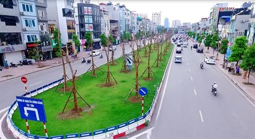 Hà Nội to grow flamboyant trees