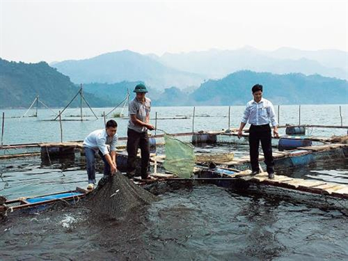 Lack of oxygen caused fish deaths