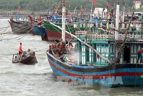 Storm Dianmu makes landfall from Hải Phòng to Ninh Bình