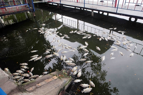 Central city to investigate fish deaths