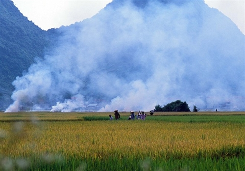 Bắc Sơn valley in ripe rice season