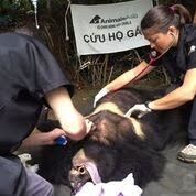 Moon bear rescued in Lâm Đồng Province