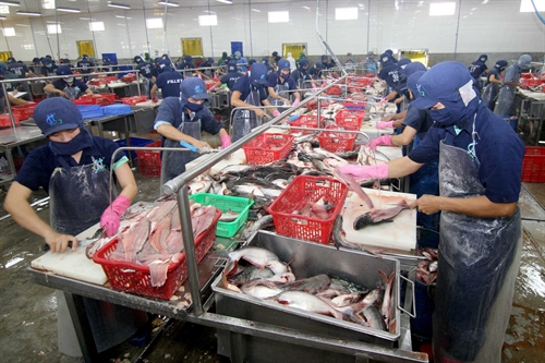 Farmers stuck with tra fish as price sinks lower