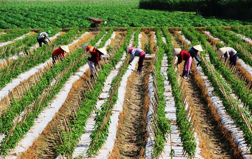 Tây Ninh aims to be agri-tech hub