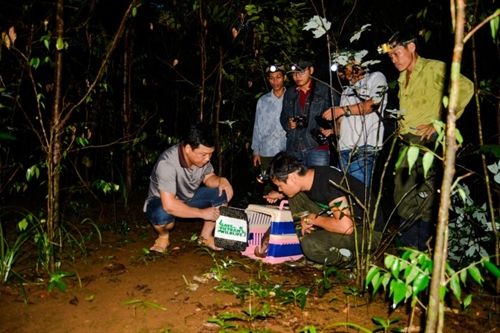 33 rare pangolins released at undisclosed secure site