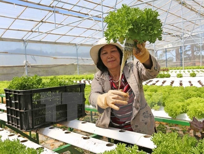 Japanese businesses eye VN agriculture