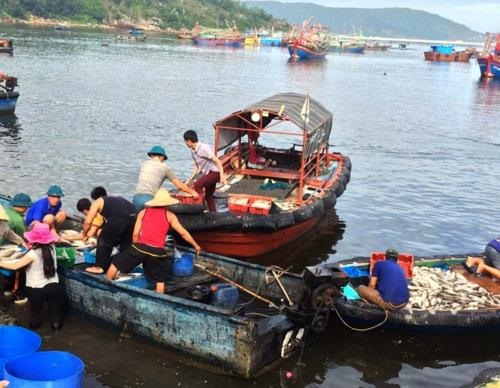 Mass fish death in Thanh Hóa does not relate to diseases