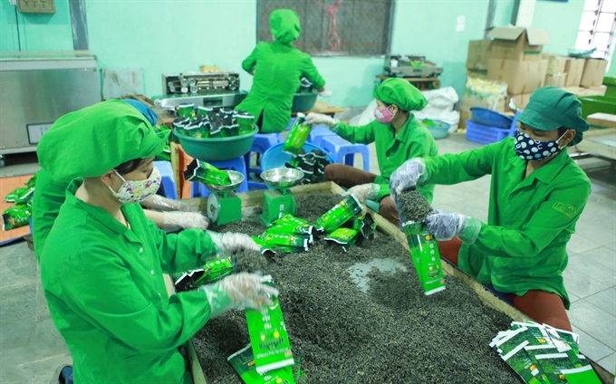 Shrinking prices lower VN tea export value