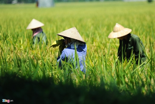 Vietnamese farmers participate in sustainable-agriculture models