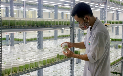 Risk-sharing key to agro growth