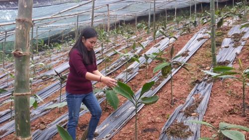 Herbal plants presevation yields large profit
