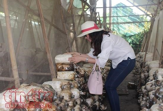 Agritourism becoming popular in HCM City
